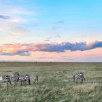 Encounter Mara zebra scenery