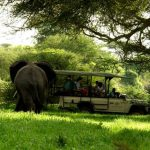 Jongomero guests in safari vehicle with elephant close by