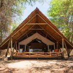 Jongomero guest accommodation chalet under trees