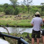 Jongomero guests enjoying sunset drinks in Ruaha watching large herd of elephant