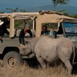 Kenya Ol Pejeta game drive with rhino