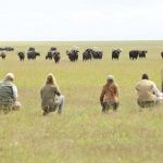 Kenya Ol Pejeta guests walking safari with buffalo looking on