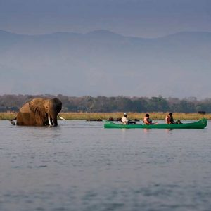 Mana-Pools_elephant-canoe