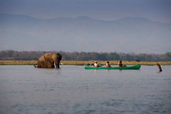 People in a canoe on a river with an elephant close to them