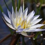 Linyanti Swamps, Linyanti Swamps, Tsodilo Hills & Okavango – 10 Days, African Safari Experts