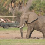 Siwandu game drive vehicle with guests and elephant walking past