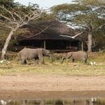 Siwandu main lodge from the lake with elephants in front of lodge