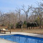 Siwandu swimming pool with elephant walking past