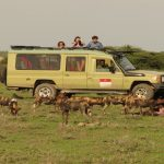 Ubuntu Camp game drive vehicle with guests observing pack of wild dogs
