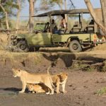 Ubuntu Camp game drive vehicle with guests watching lion cubs at water hole