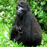 Mahogany Springs, Mahogany Springs, African Safari Experts, African Safari Experts