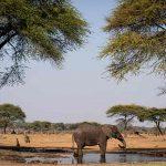 an elephant drinking in a waterhole