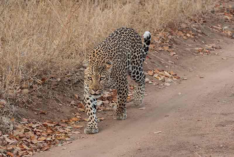 Adventure Luangwa, Adventure Luangwa – 8 Days, African Safari Experts, African Safari Experts