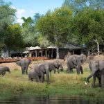 Zimbabwe's luxury safari lodge Ruckomechi