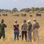 Guests walking with guide in the Serengeti with elephants in teh distance