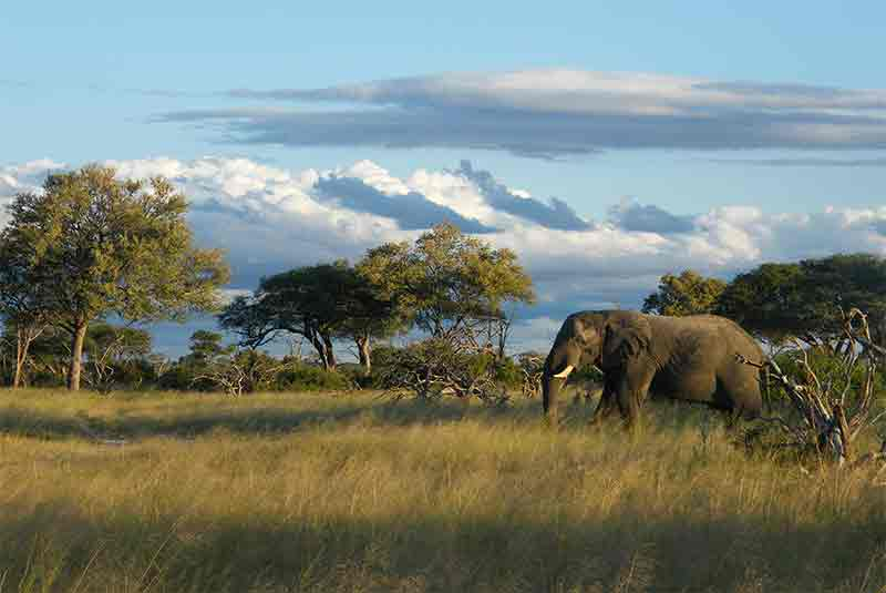 African tours and accommodation, African Tours and Packages, African Safari Experts